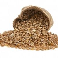 新小麦,黑豌豆,油菜籽